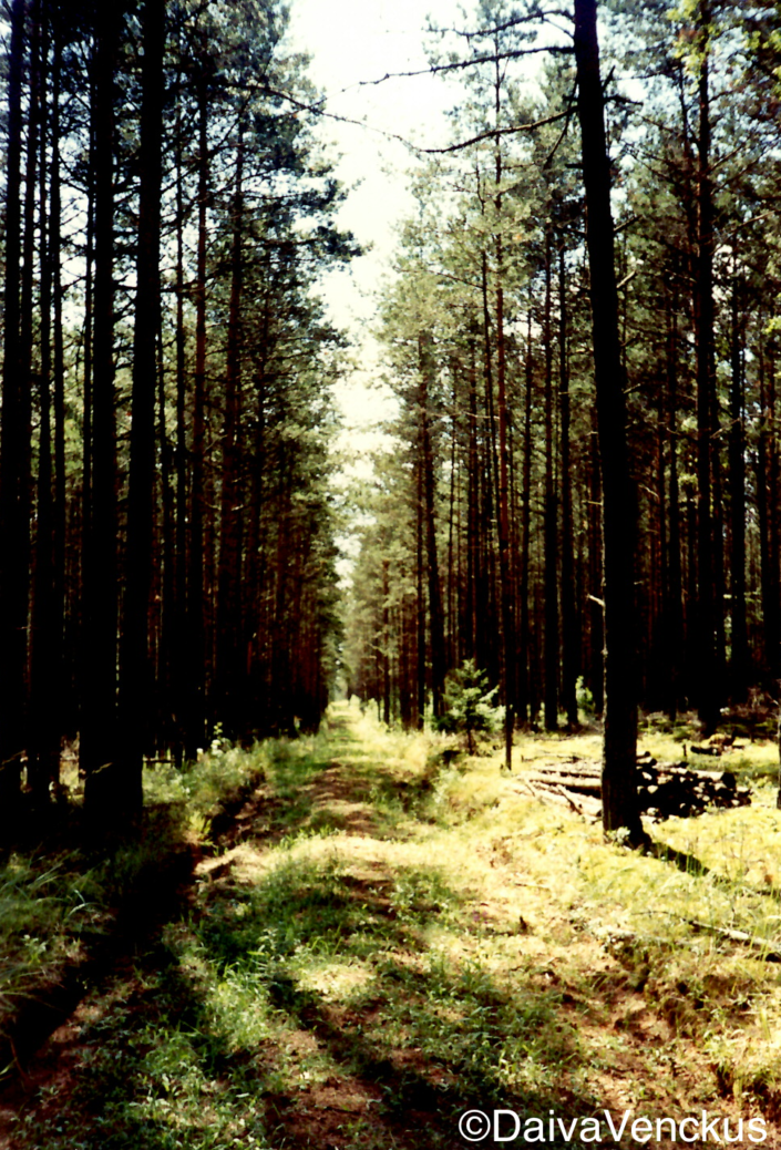 Chapter 13: Lithuanian Forest